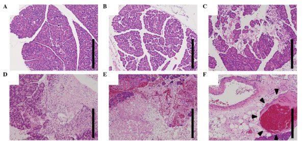 Гистологические исследования ткани