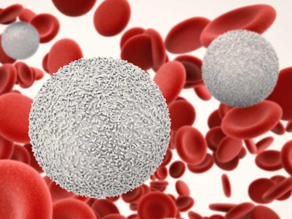 Лейкоциты в крови человека