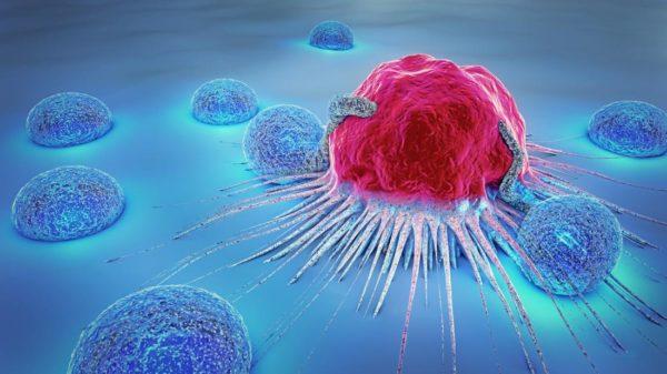 Иммунные клетки окружают раковую