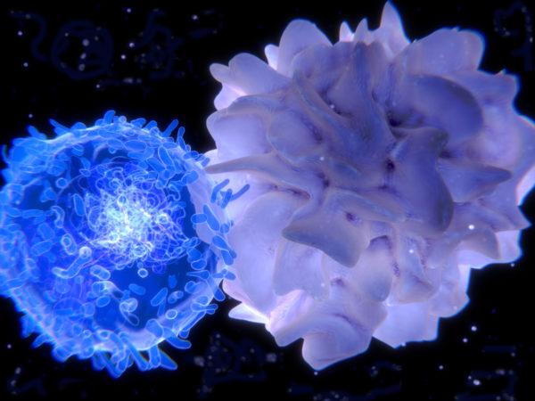 Активация Т-лимфоцита