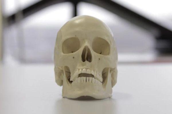Лицевая область черепа