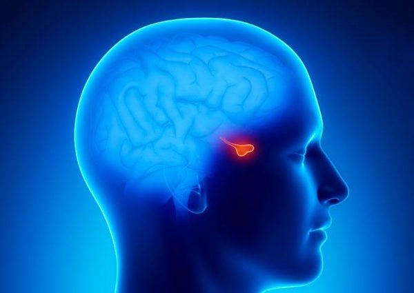 Карман Ратке в мозге