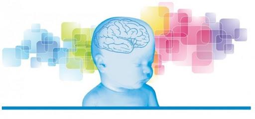 Головной мозг новорождённого